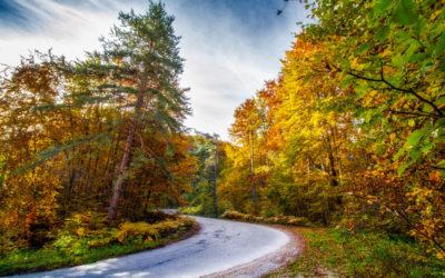 AutumnTurn
